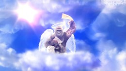 Harambe Is A Pittsburgh Steelers Fan