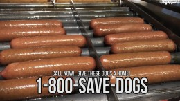 Bunless Buccos' Hot Dogs – ASPCA Parody
