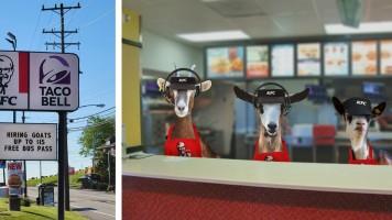 KFC Goats